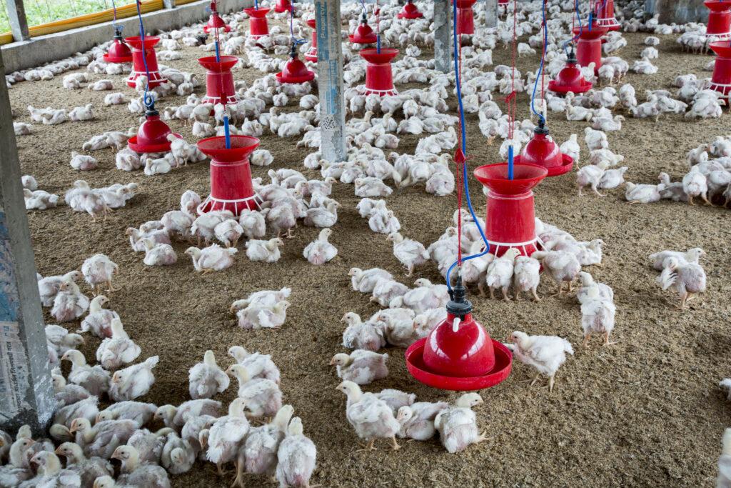 Jalisco: presenta iniciativa de ley de Bienestar Animal