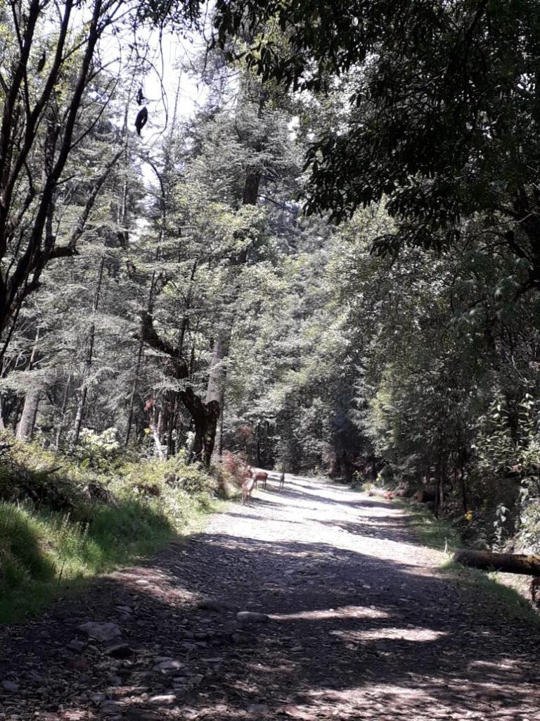 Incrementa fauna silvestre en suelo de conservación