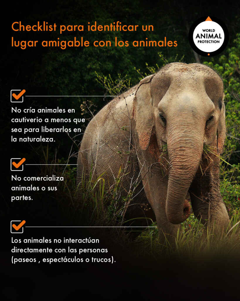 20 elefantes enfermos dejarán crueles paseos en India