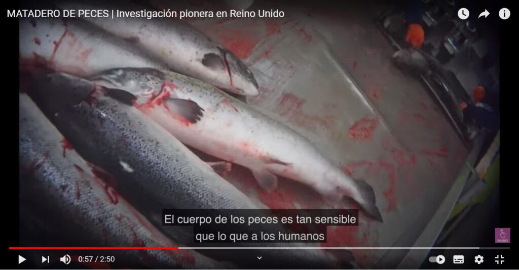 Prácticas realizadas a peces:  ilegales por su brutalidad