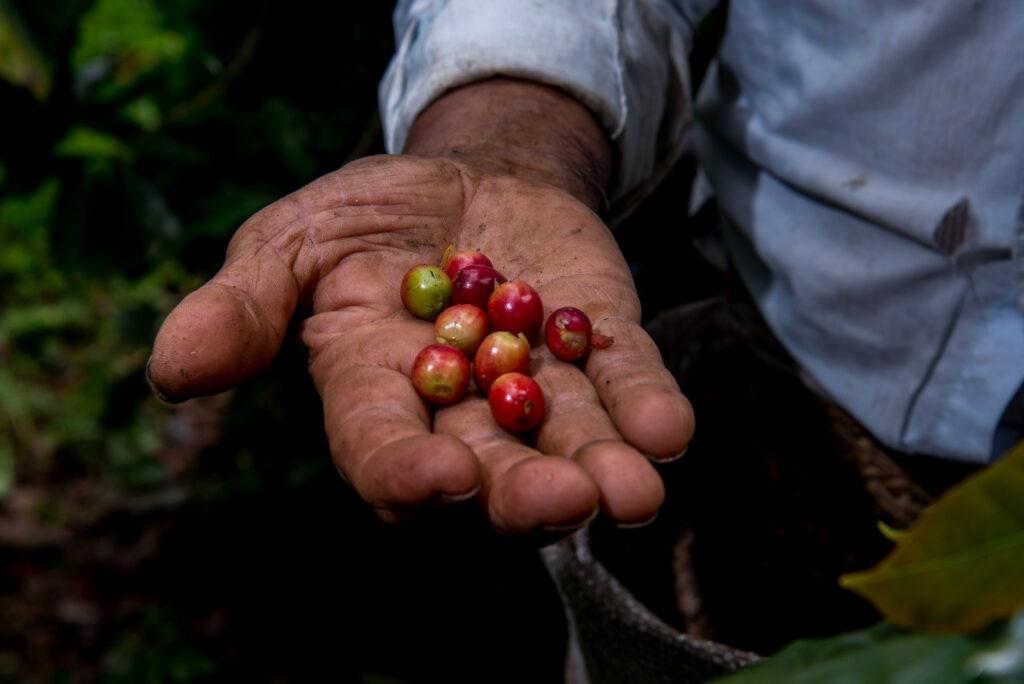 Dispersan 90% de recursos en enero-marzo a productores