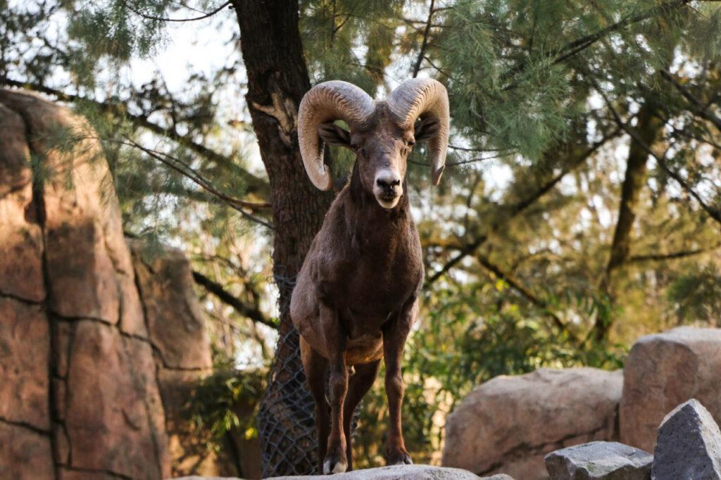 Reabren Zoológicos de la Ciudad de México el 9 de marzo