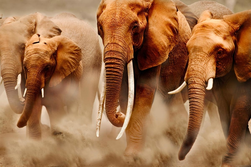 WWF cumple 60 años de impacto en la conservación