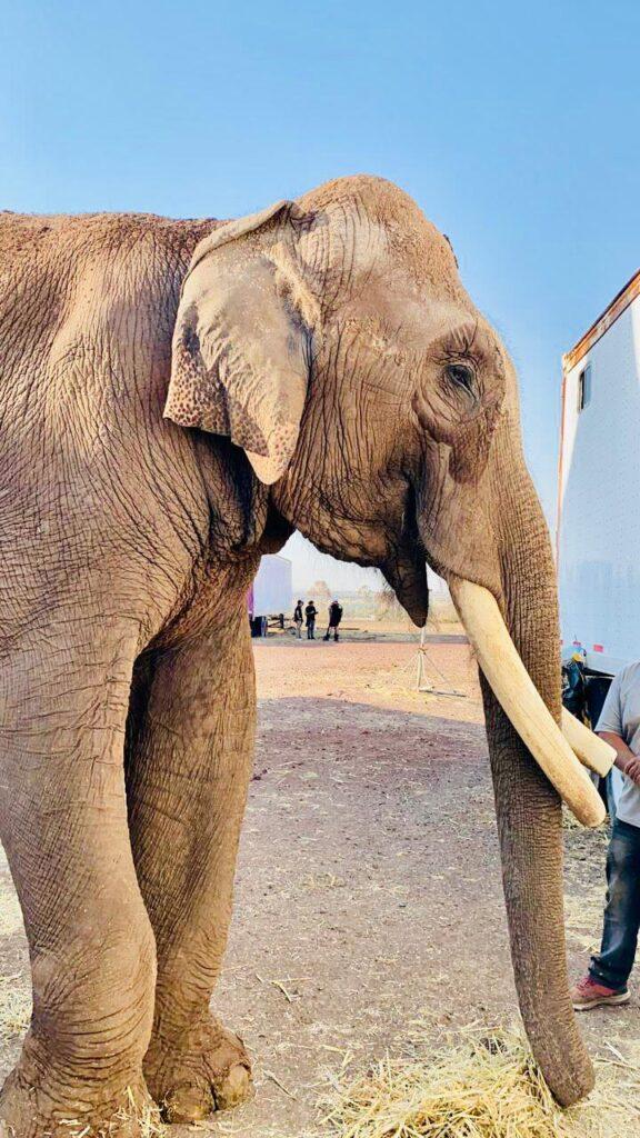 Azcarm se suma al rescate del elefante Big Boy