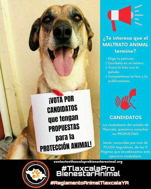 Activistas piden a candidatos acabar con maltrato animal