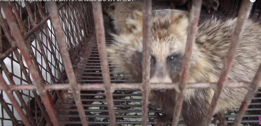 OMS pide prohibir la venta de animales vivos