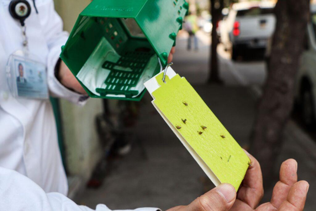 Aplican acciones para eliminar brote de mosca