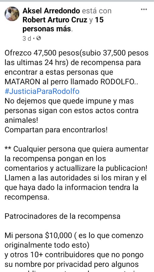 Justicia no venganza en el caso del perrito Rodolfo