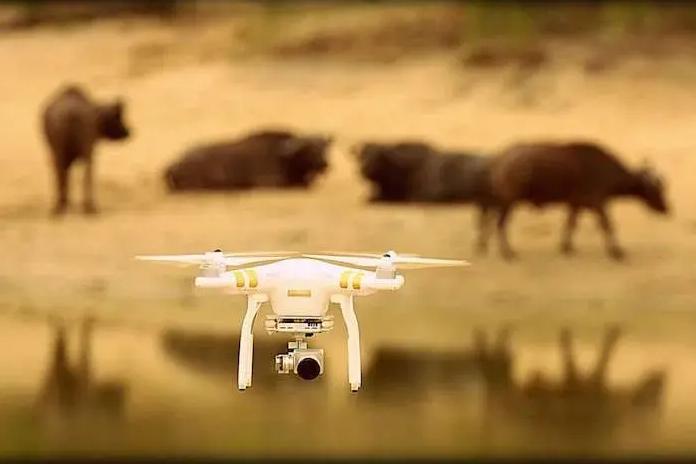 Usan drones para controlar caza ilegal