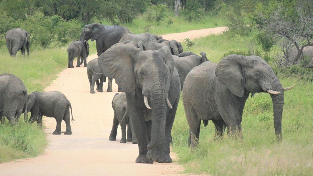 Aumentan conflictos entre animales y humanos en África