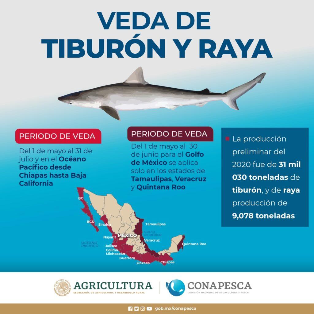 Inicia veda de tiburón y raya en el litoral Océano Pacífico