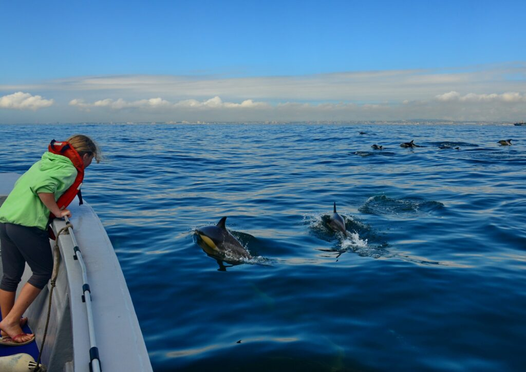 Algoa Bay es declarado Sitio para protección de ballenas
