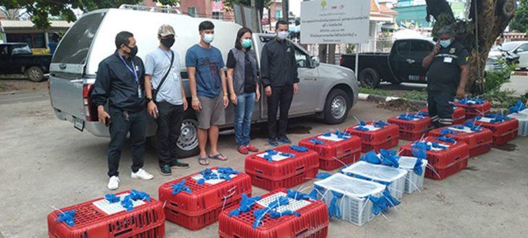 Rescatan 88 macacos tailandeses del comercio