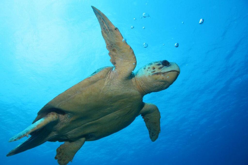 México rebasó más de diez veces mortandad de tortugas
