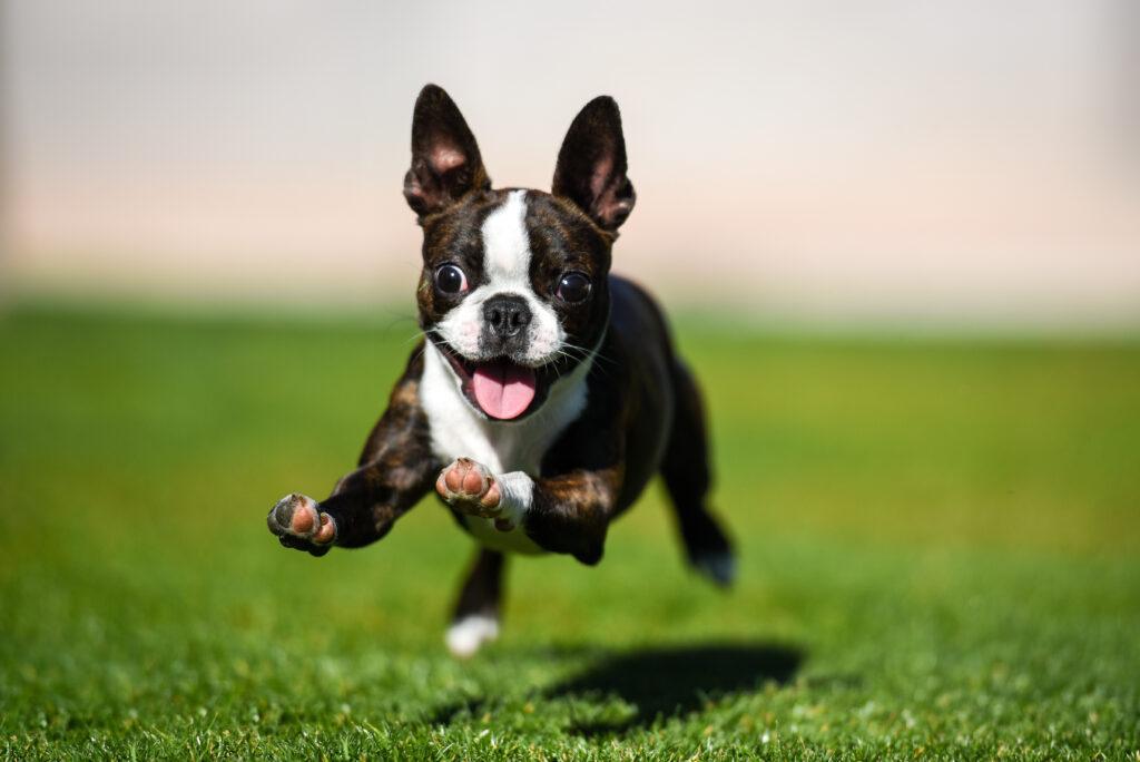 ¿Cómo celebrar el Día Mundial del Perro?