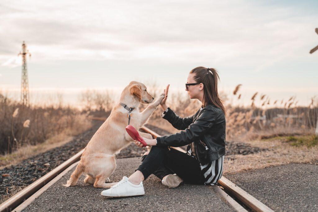 ¿Cómo consentir a mi perro de acuerdo a sus rasgos?