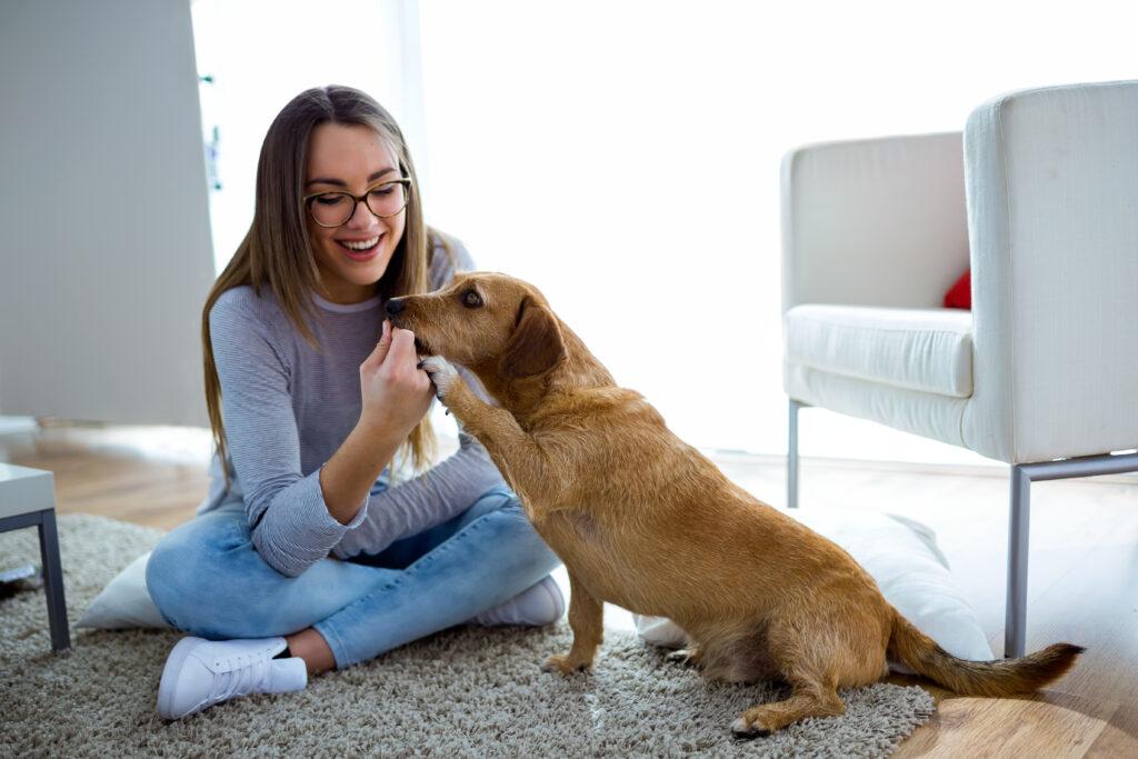 Lo que tienes que saber sobre los huesos de tu mascota