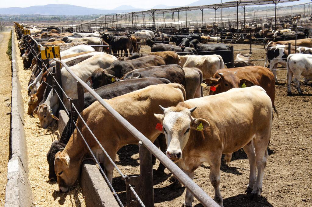 Firman México y EU protocolo para movilizar ganado