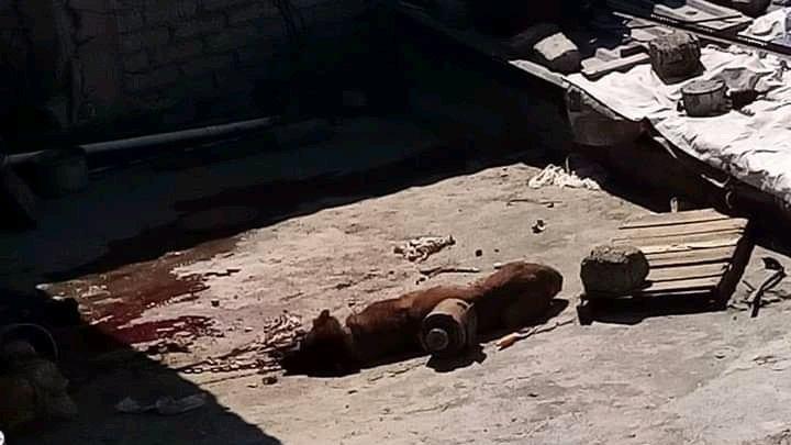 Familia asesina a golpes perrito en Tlalnepantla