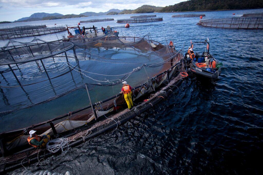 Argentina primer país en prohibir cría de salmones