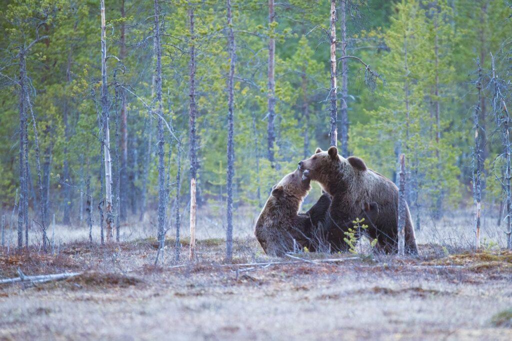La deforestación causa daños ambientales incalculables