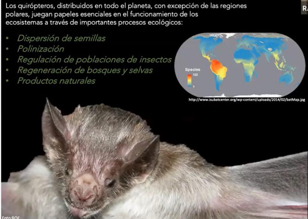 SARS-CoV-2 no circula en  murciélagos: especialista