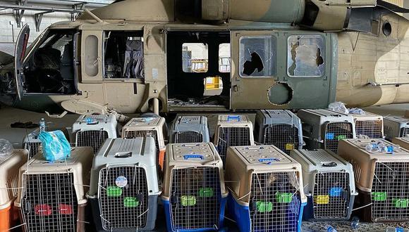 EU dejó a sus perros abandonados en Kabul