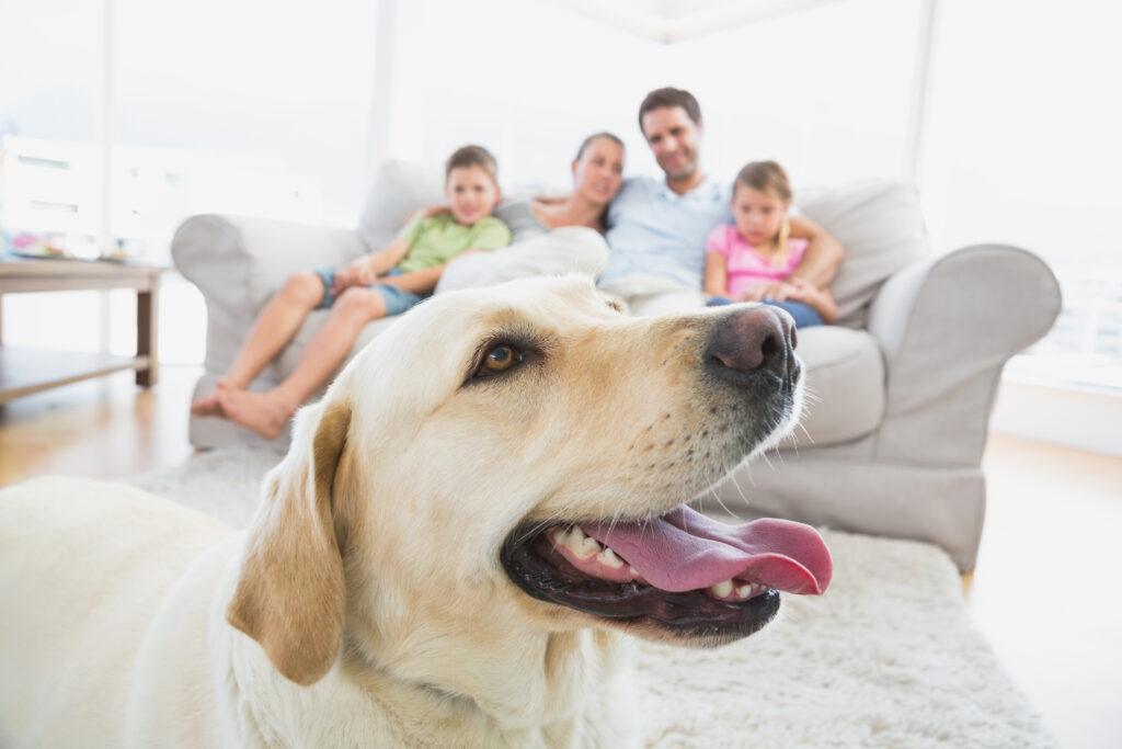 El secreto de una mayor longevidad en tu perrito