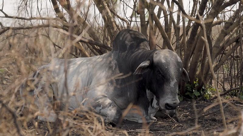 Derbez denuncia matanza cruel de animales en Brasil