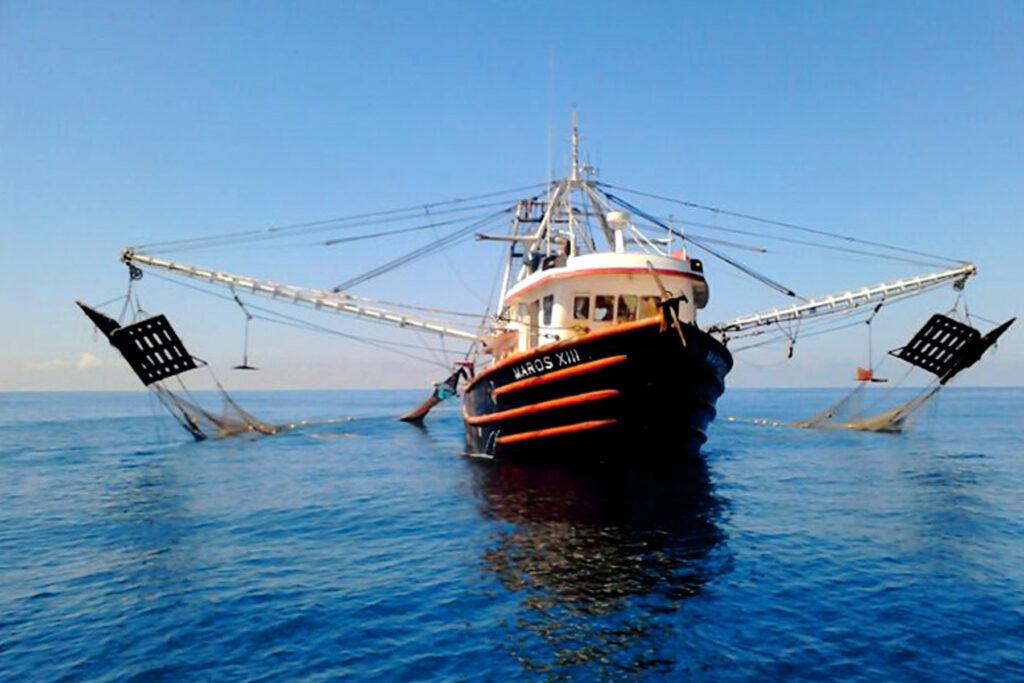 Levantarán veda de pesca de camarón en el Pacífico