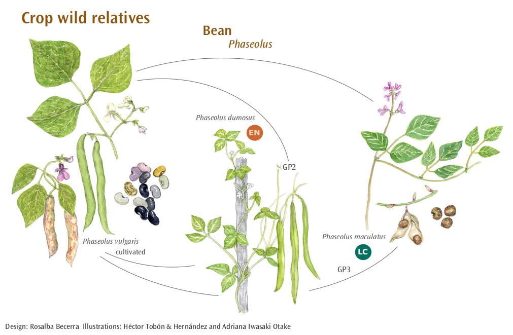 En extinción más de 70 parientes silvestres de plantas