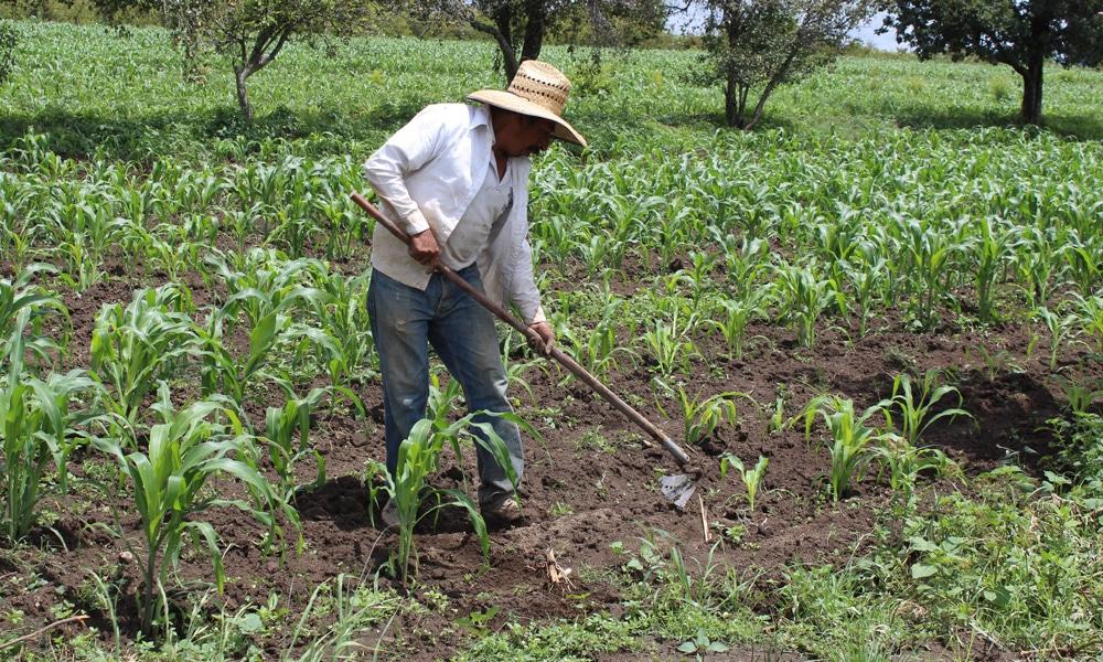 El campo de México sumido en la pobreza