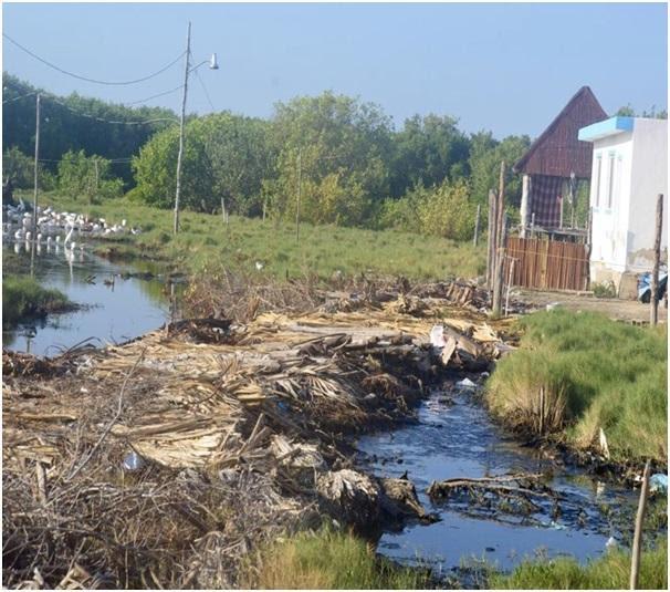 Continúan destruyendo manglar ilegalmente en Holbox