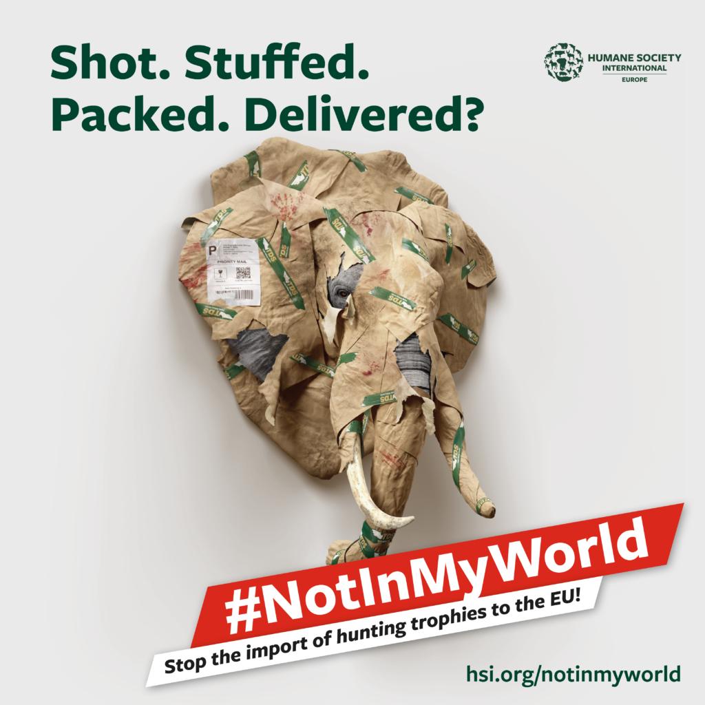 Campaña #NotInMyWorld para prohibir trofeos de caza