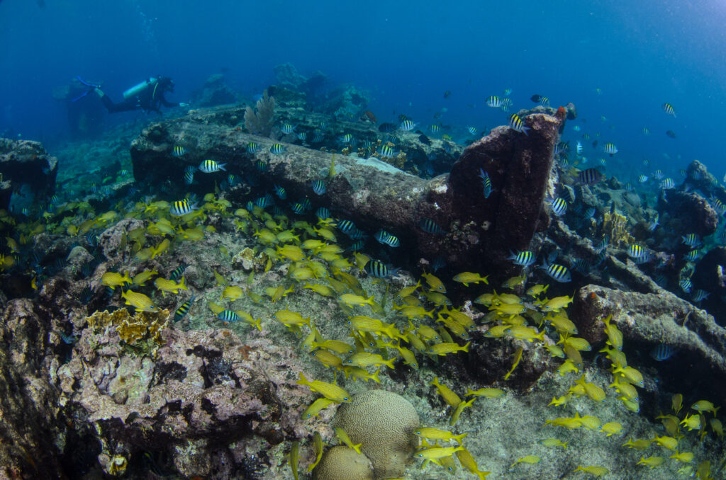 Urge mayor protección del Arrecife Alacranes: Oceana