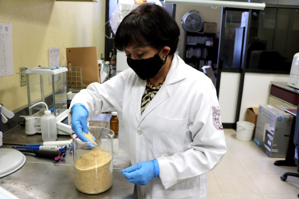 Semilla germinada de amaranto reduce colesterol